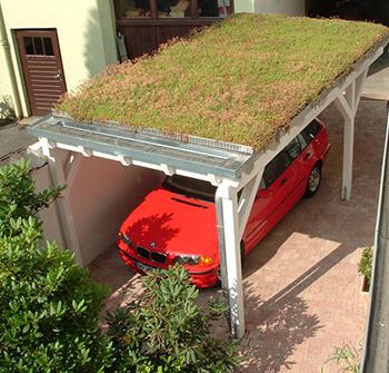 Carport Gründach pflegen