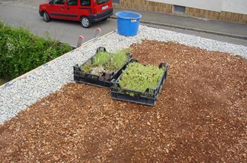 Gründach Carport pflegen